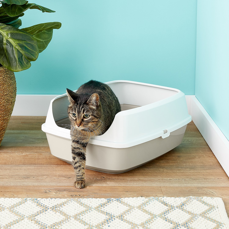 cat in Frisco Open Top Cat Litter Box With Rim