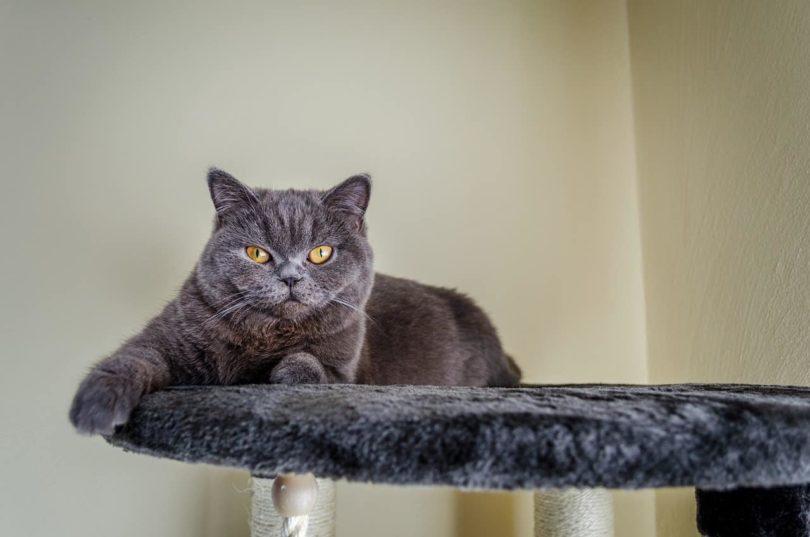 cat in cat tree_Pixabay