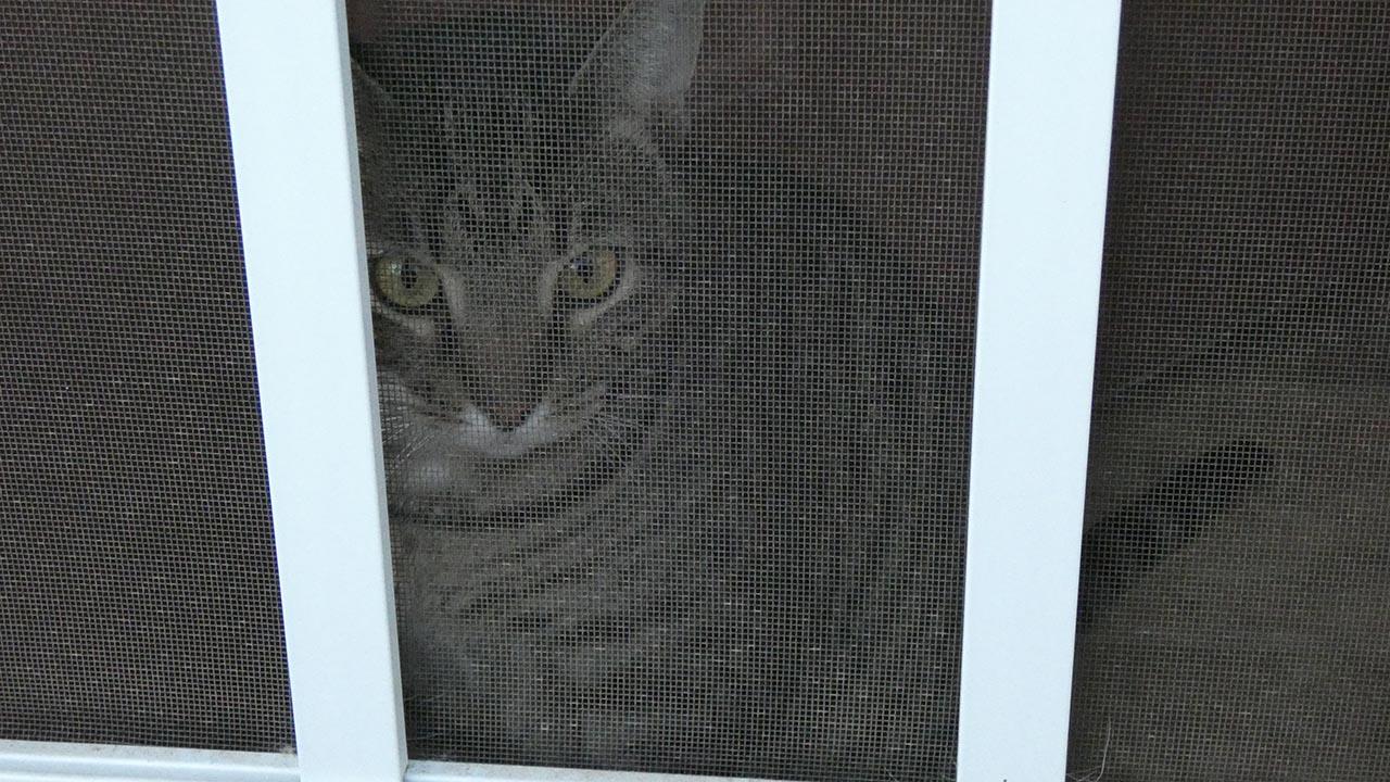 cat in the screen door