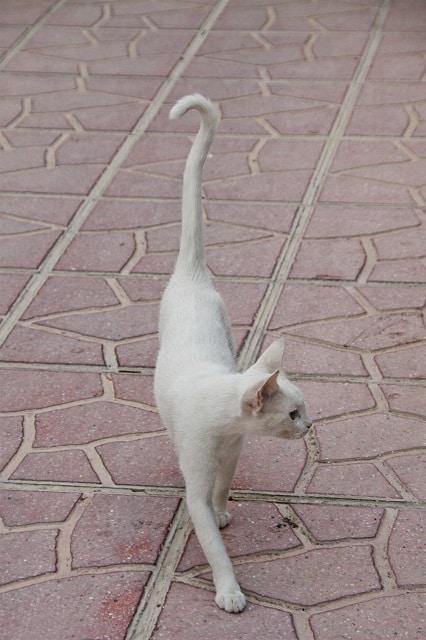 cat-losing weight-pixabay
