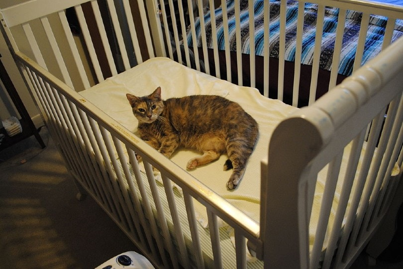 cat lying in a baby crib