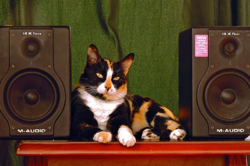 cat lying between speakers