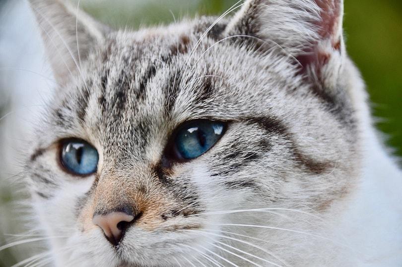 cat nose -pixabay