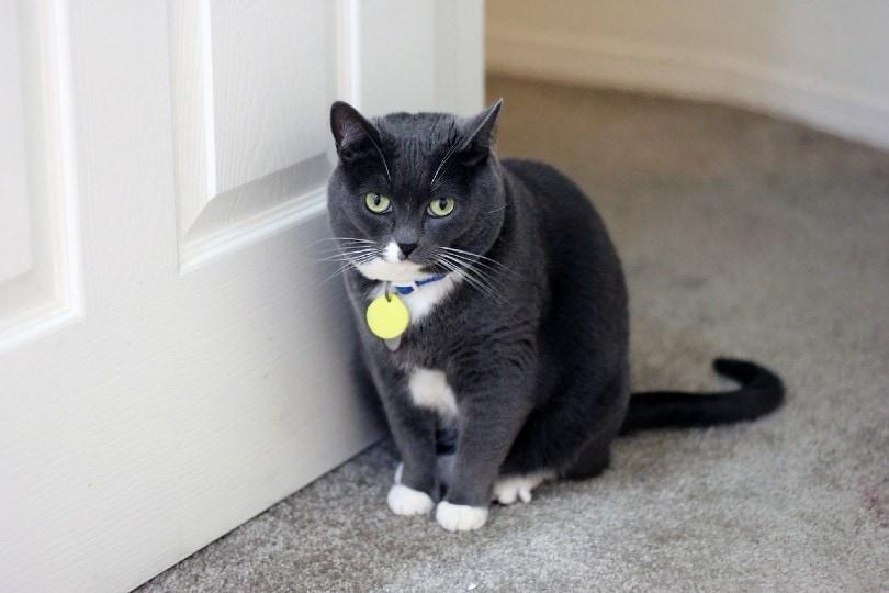 cat sitting by the door_Lauren Hudgins, Pixabay