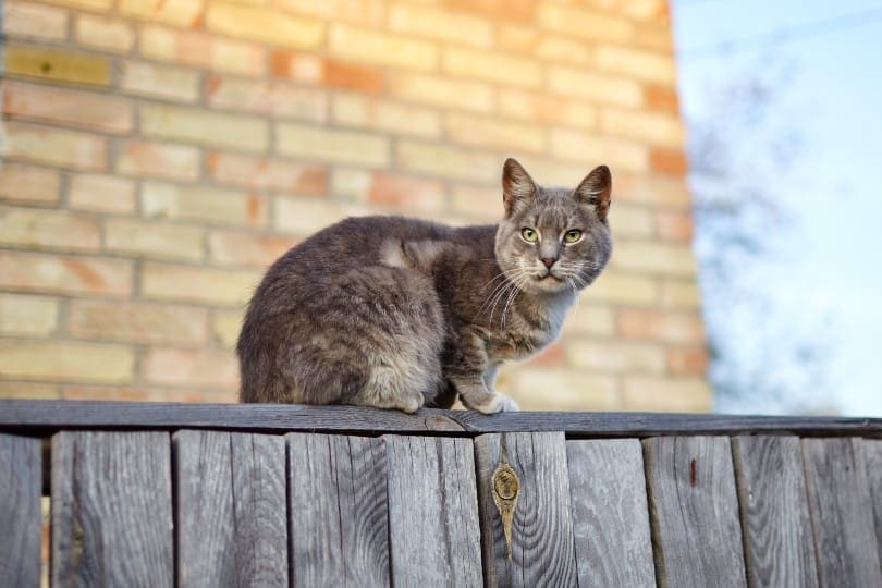 cat sitting on the fence_Andrii Salomatin, Shutterstock