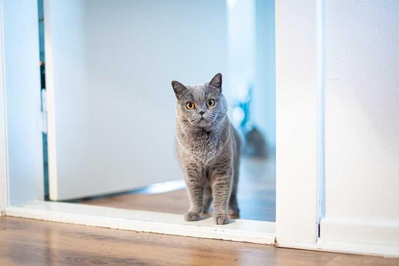 cat standing by the door