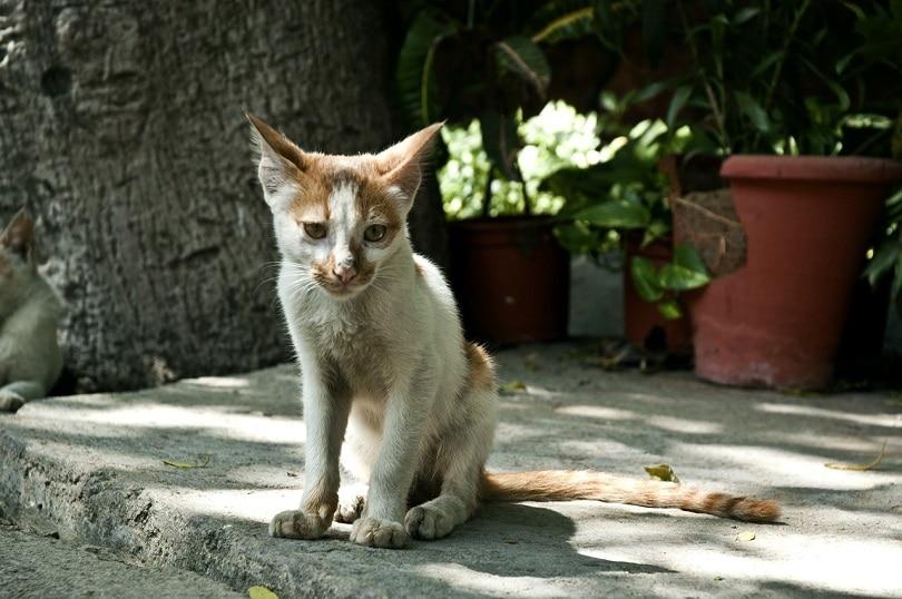 cat thin-pixabay