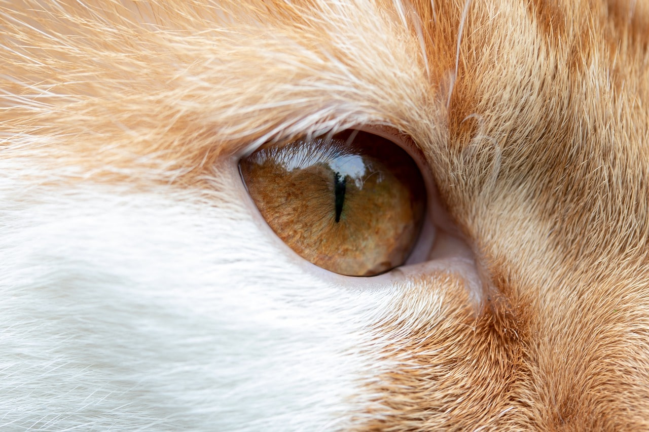 cat's eye close up_Pixabay