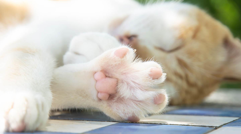 close up cat toes