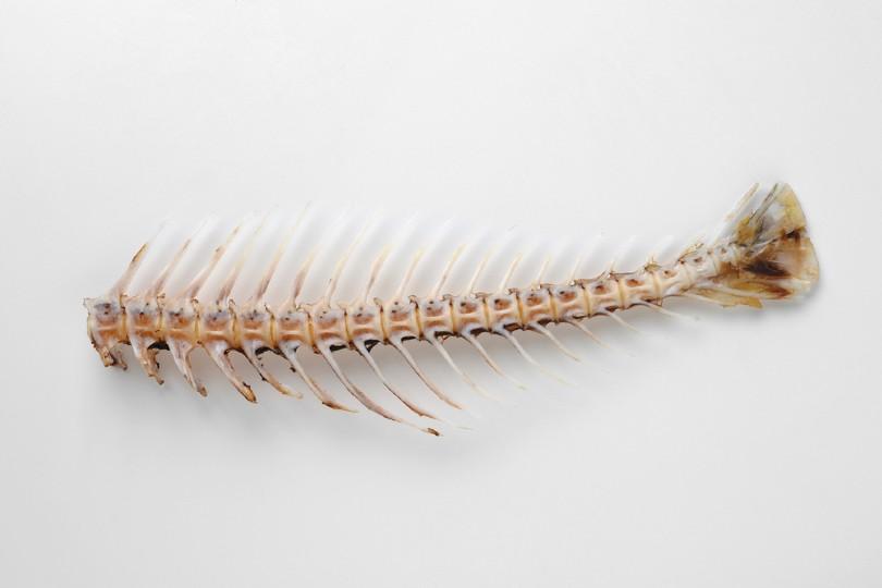 fishbone isolated on white