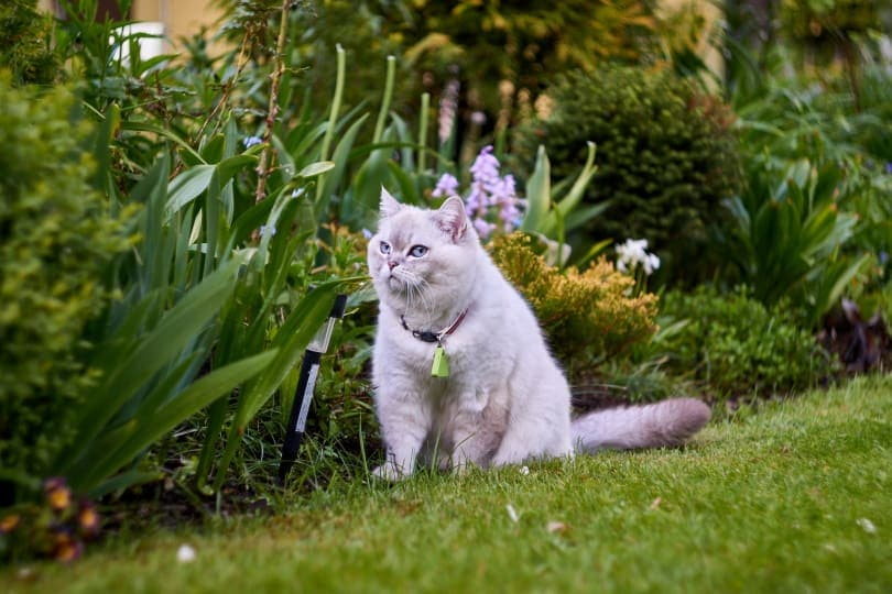 Cat_Katarzyna Kosianok_Pixabay