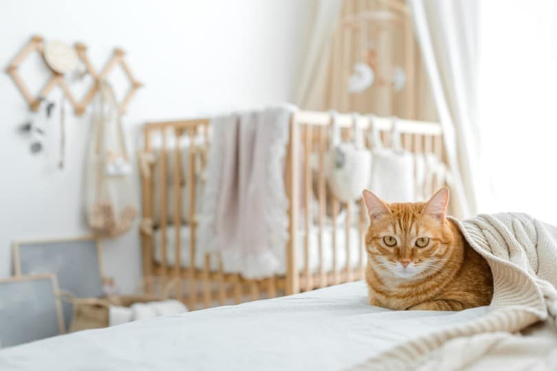 ginger cat with a background of a crib