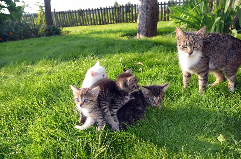 kittens in garden_Jonas Jovaisis _Pixabay