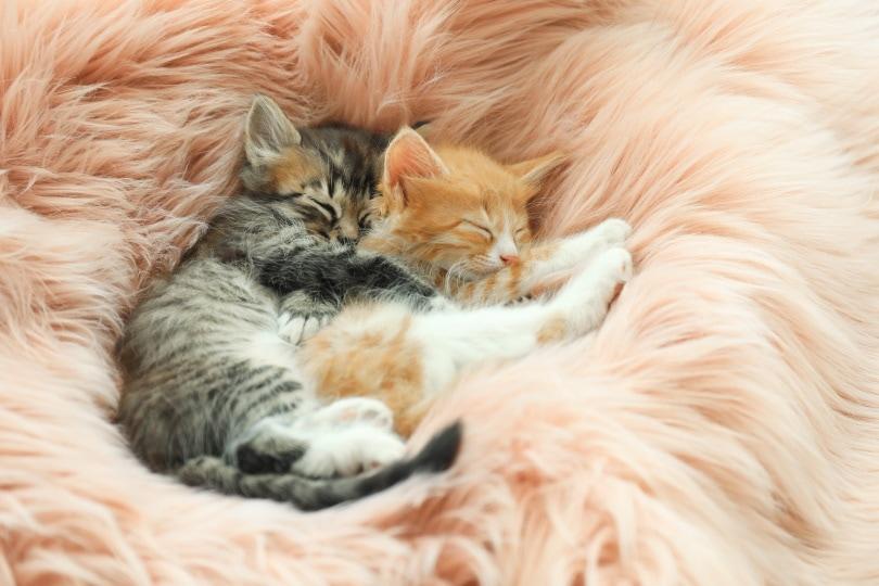 kittens sleeping_New Africa_Shutterstock