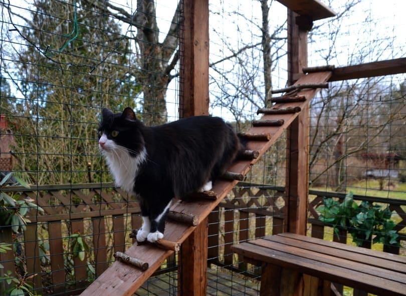 outdoor cat enclosure_SariMe_Shutterstock