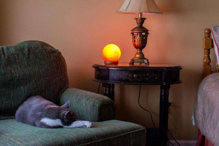 cat sleeping near salt lamp
