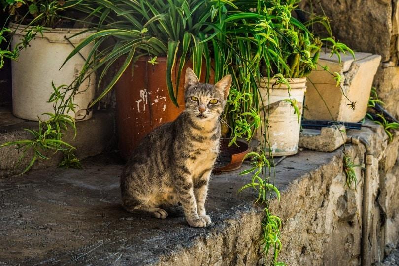 stray cat_Dimitris Vetsikas, Pixabay