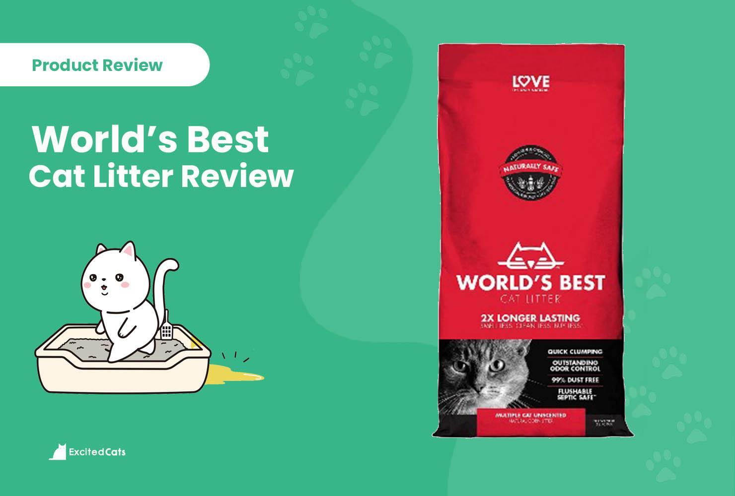 world best cat litter reviews