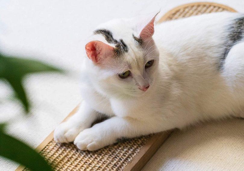 Cat Scratching Floor