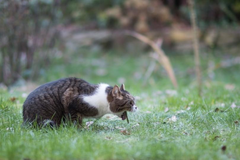 Cat vomiting_Nils Jacobi_Shutterstock