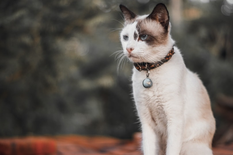 cat collar_Piqsels