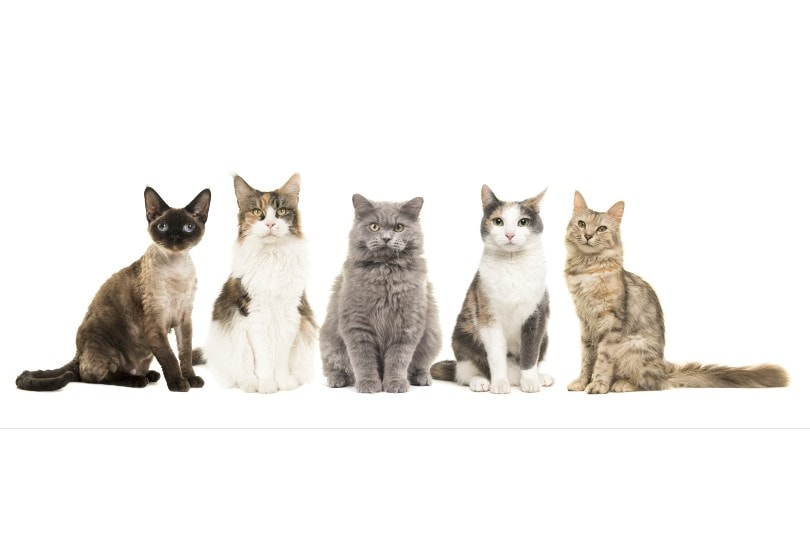 different breed of cats