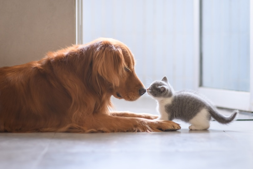 dog and kitten_Chendongshan_Shutterstock