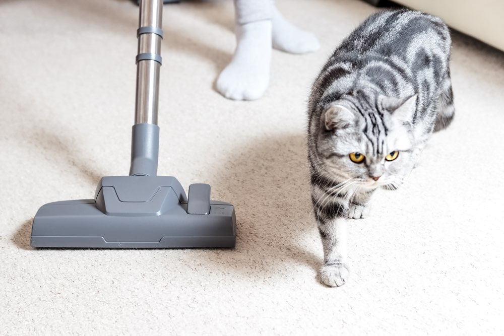 kucing menggemaskan berjalan di samping vakum