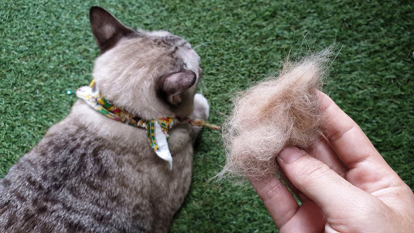 hand holding cat shedded hair