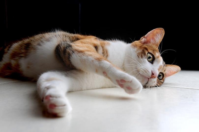 A cat lying on bathroom floor