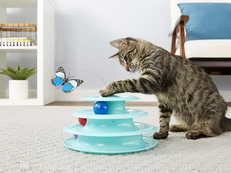 Cat Playing Frisco Cat Tracks Butterfly Cat Toy