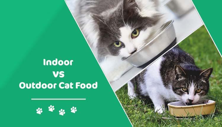 indoor vs outdoor cat food